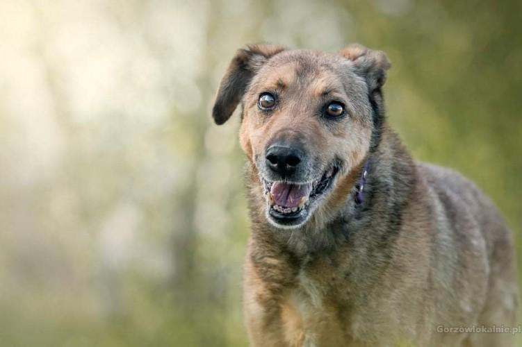 Żwirek - nieśmiały, cudowny psiak szuka kochającego domu!